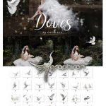 دانلود مجموعه ۳۱ عکس کبوتر PNG بدون بک گراند Doves Overlays