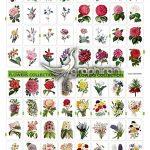 دانلود ۱۰۰ تصویر PNG گل سبک آبرنگ Watercolor Flowers Bundle