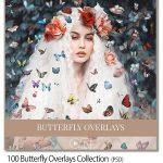 دانلود ۱۰۰ عکس دوربری شده پروانه لایه باز Butterfly Overlays Collection