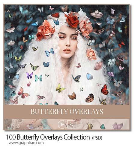 مجموعه 100 عکس دوربری شده پروانه