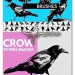 دانلود 35 براش فتوشاپ کلاغ با کیفیت Crow Brushes for Photoshop