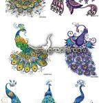 دانلود مجموعه تصاویر وکتور طاووس بدون بک گراند با رنگ های متنوع