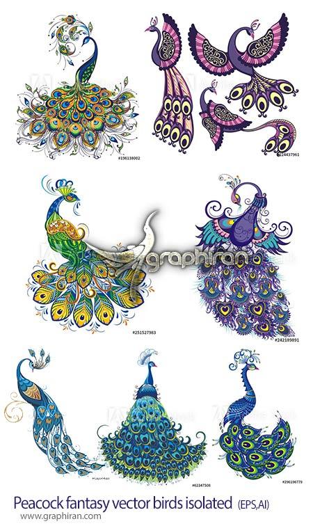 دانلود مجموعه تصاویر وکتور طاووس