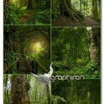 دانلود تصاویر استوک بک گراند جنگل فوق با کیفیت Jungle UHQ Photos