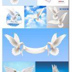 دانلود تصاویر وکتور کبوتر سفید در حال پرواز White Pigeons Vector Set