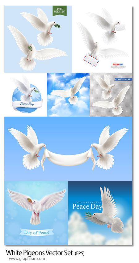 دانلود تصاویر وکتور کبوتر سفید در حال پرواز واقع گرایانه