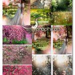 دانلود مجموعه بک دراپ و پس زمینه باغ بهاری و شکوفه Summer Backdrop Photoshop Overlay