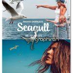 دانلود 46 عکس PNG مرغ دریایی با کیفیت Seagull Photo Overlays