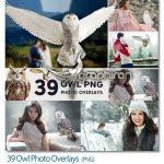 دانلود 39 عکس PNG جغد با کیفیت بالا Owl Photo Overlays