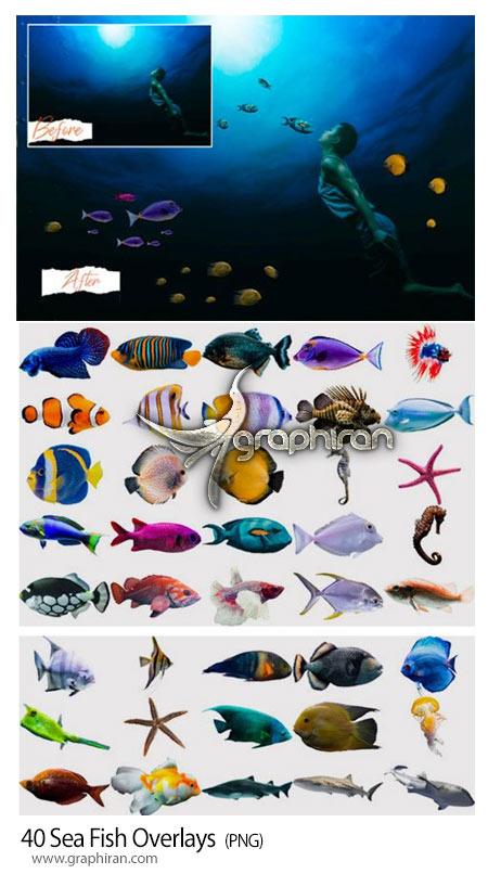 دانلود 40 عکس PNG دوربری انواع ماهی های دریایی