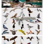 دانلود 45 عکس PNG انواع پرندگان واقعی Realistic Bird Overlays