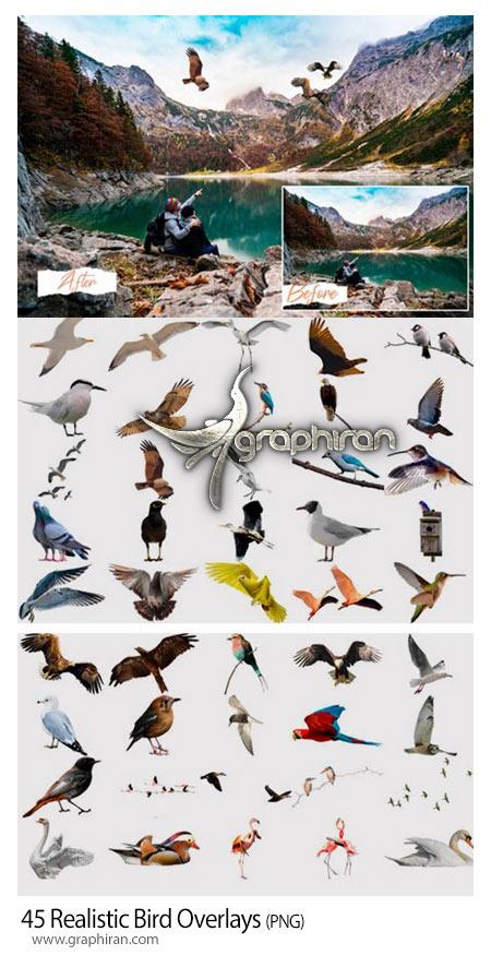 دانلود 45 عکس PNG پرندگان واقعی