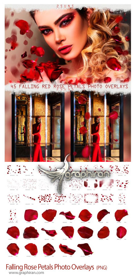 دانلود 45 عکس PNG ریختن گلبرگ های گل رز قرمز Falling Rose Petals Photo Overlays