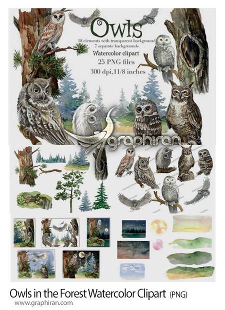 دانلود مجموعه کلیپ آرت جغد و جنگل