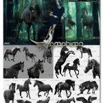 دانلود 33 عکس اسب سیاه PNG دوربری شده Photoshop Overlay Black Horse