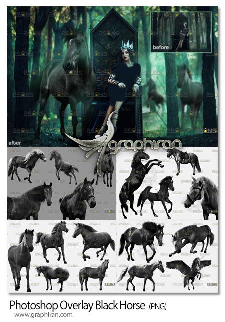 دانلود 33 عکس اسب سیاه PNG دوربری شده