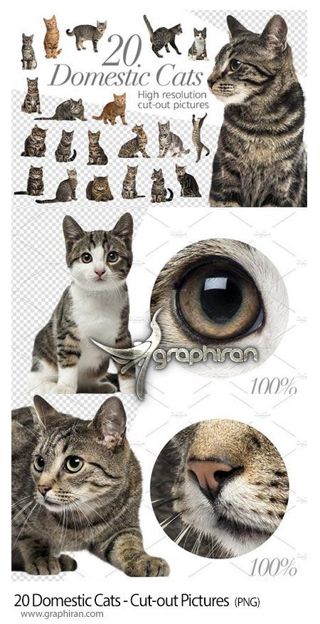عکس گربه خانگی PNG