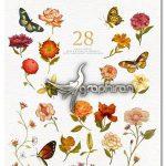 دانلود مجموعه کلیپ آرت PNG گل و پروانه Flowers & Butterflies Clipart