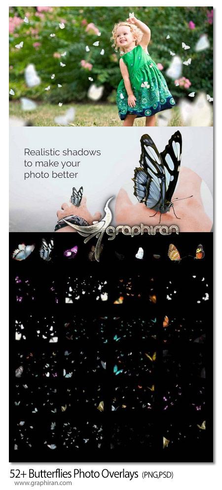 عکس پروانه PNG با کیفیت بالا